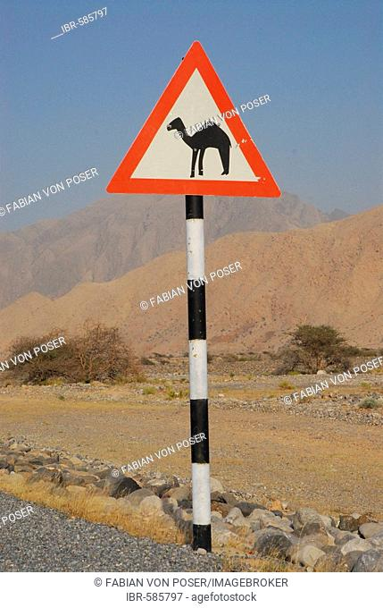 Street sign: Beware of camels!, near Muscat, Oman