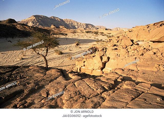 Sinai Desert near Nuweiba, Sinai, Egypt