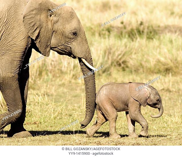 Mother and Baby African Elephant - Masai Mara National Reserve, Kenya