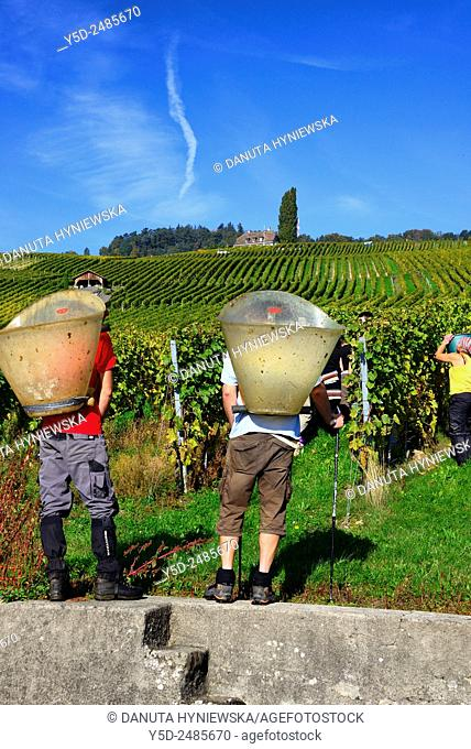 Europe, Switzerland, Canton Vaud, District Morges, Fechy, two young men with big carrying containers on their back waiting for picked grapes, harvest time