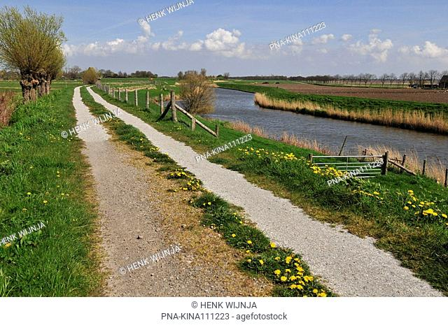 Willow, Pollard-willow Salix alba - Wieringerrandkanaal, Wieringen, Wieringermeer, North Holland, The Netherlands, Holland, Europe