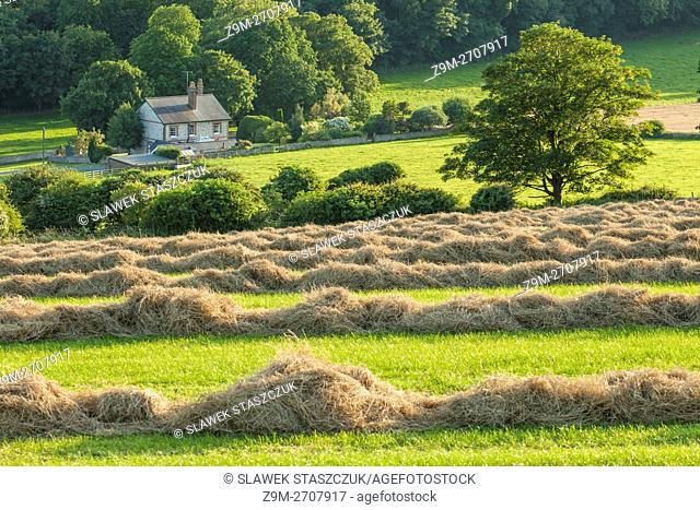 Summer afternoon on the South Downs near Lewes, East Sussex, England
