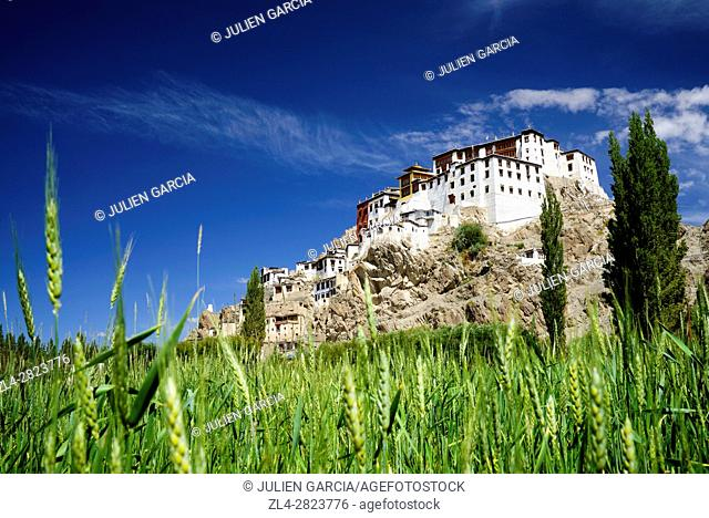 India, Jammu and Kashmir State, Himalaya, Ladakh, Indus valley, Buddhist monastery of Spituk and green barley fields