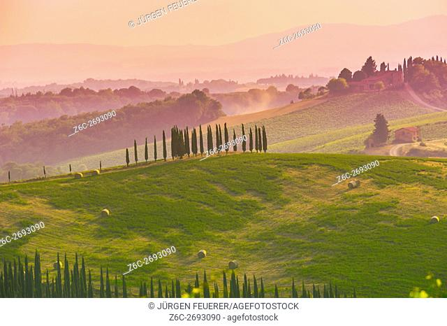 cypresses on hills light of the Crete Senesi, in the evening light near Pienza, Tuscany, Italy