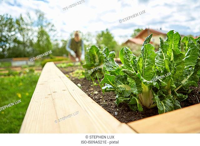 Mature woman, outdoors, gardening, focus on plants