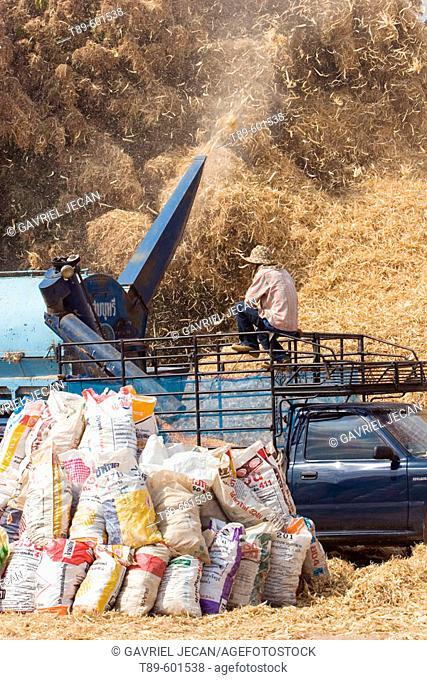 Corn Decortication in Mae Hong Son region, Thailand