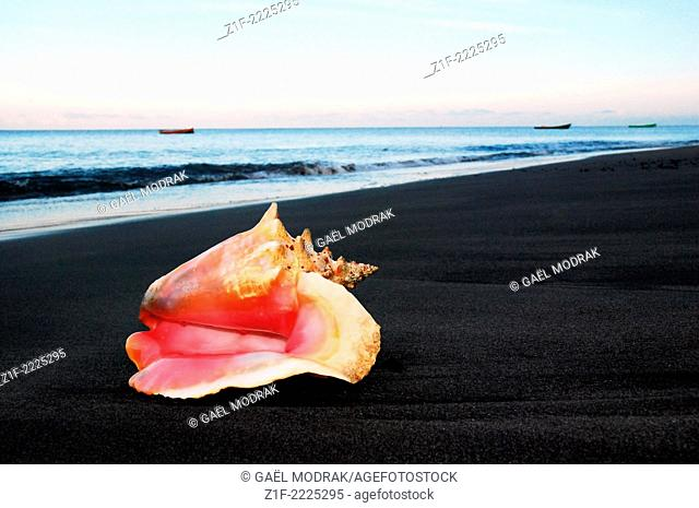 Contrast beetween a pink shell lying on the dark volcanic sand of Saint-Pierre's town, in the north of Martinique Island, France