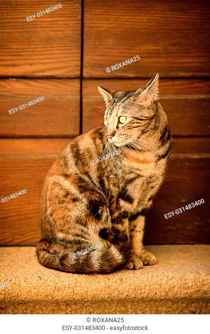 Portrait of a tabby street cat with green eye sitting near wall and looking, animal natural background