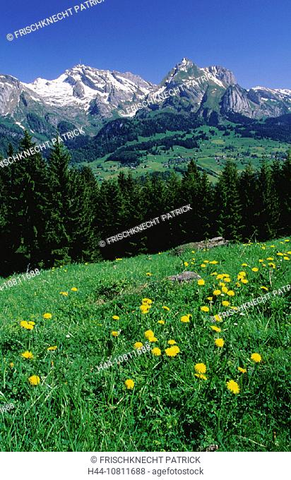 2, 502 ms, alpine, Alps, Alpstein, Alpstein area, blue, blue sky, broadness, rock, cliff, dandelion, east Switzerlan