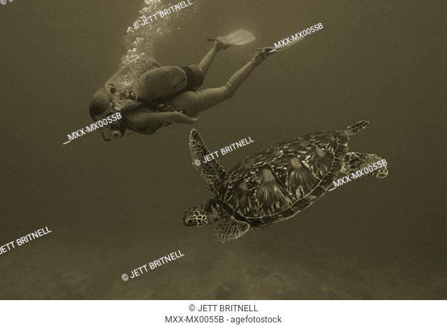 Scuba diver with sea turtle
