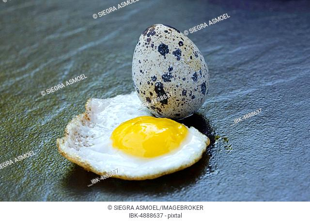 Quail egg and fried egg, Germany