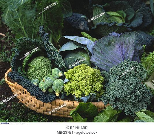Basket, Cabbage, Vegetable