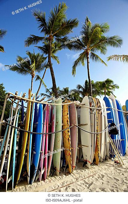 Row of surfboards on beach, Waikiki, Oahu, Hawaii, USA