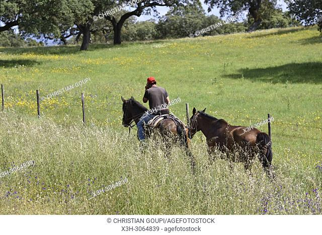 rider and horses in the country side near Amareleja, Alentejo region, Portugal, southwertern Europe