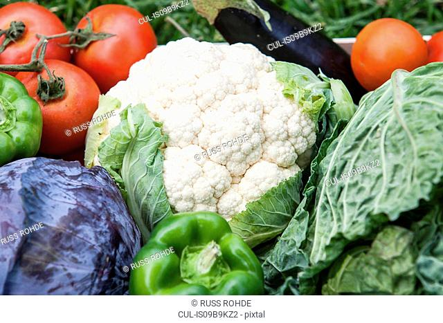 Variety of homegrown vegetables