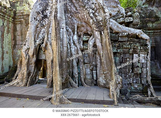 Distinctive trees growing at Ta Prohm temple, Angkor, Siem Reap, Cambodia