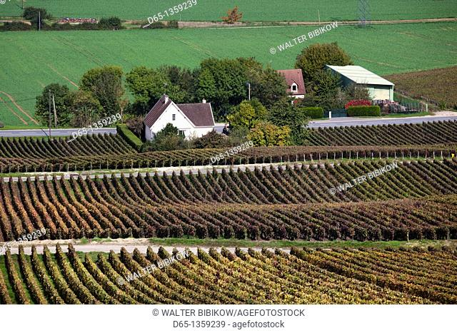 France, Marne, Champagne Region, Brugny, elevated vineyard view