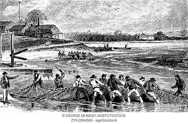 1879: Shad fishing in Delaware Bay, which would be preserved by a unique smoking process that would keep them edible through the winter