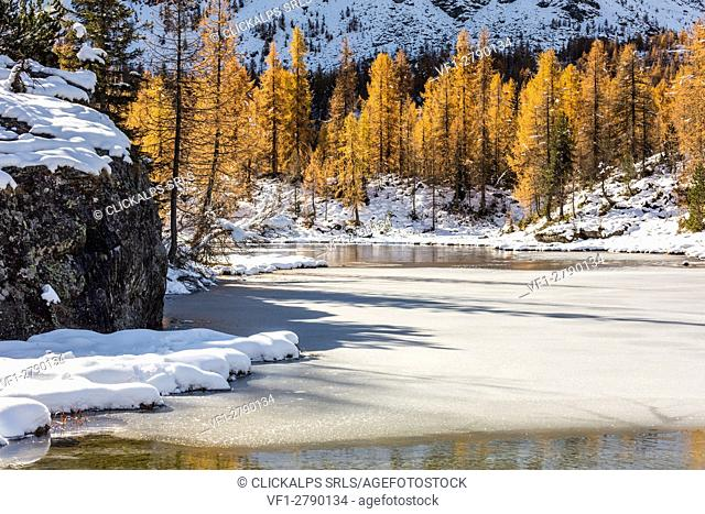 Larches reflections on the iced waters of Mufule Lake. Valmalenco, Valtellina, Sondrio, Lombardy, Italy, Europe