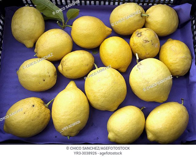 Lemons in a box in Prado del Rey, Sierra de Grazalema, Andalusia, Spain