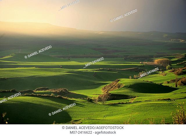 Cardenas valley, cereal fields at sunset. Rioja wine region, Spain, Europe