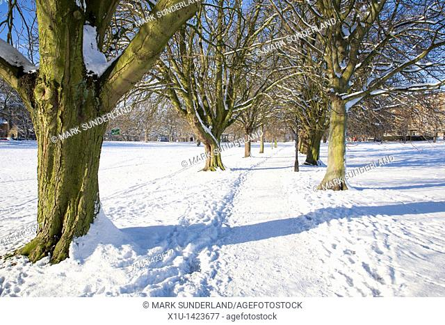Tree Lined Path on The Stray in Winter Harrogate North Yorkshire England