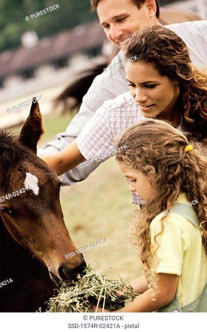 Girl feeding a horse with her parents