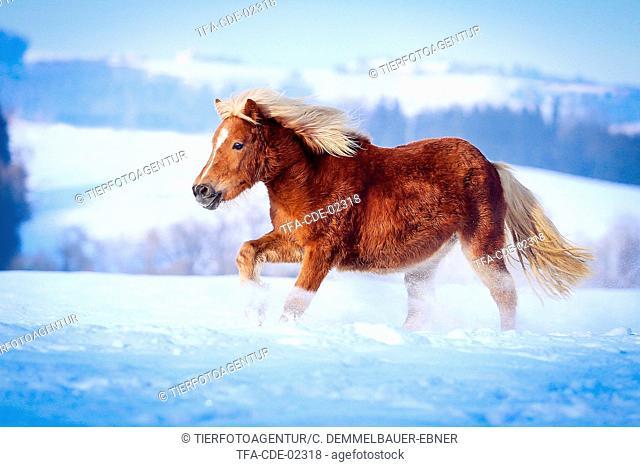 galloping Pony