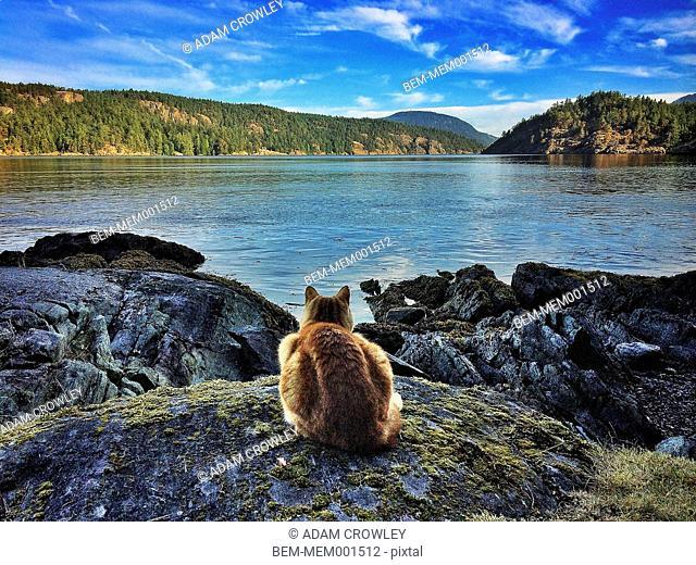 Cat sitting on rock at lake