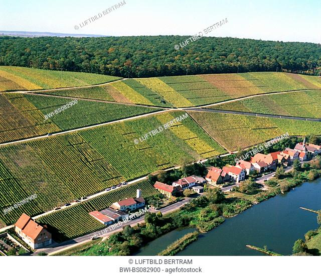 vineyards near Escherndorf, Germany, Bavaria, Volkach