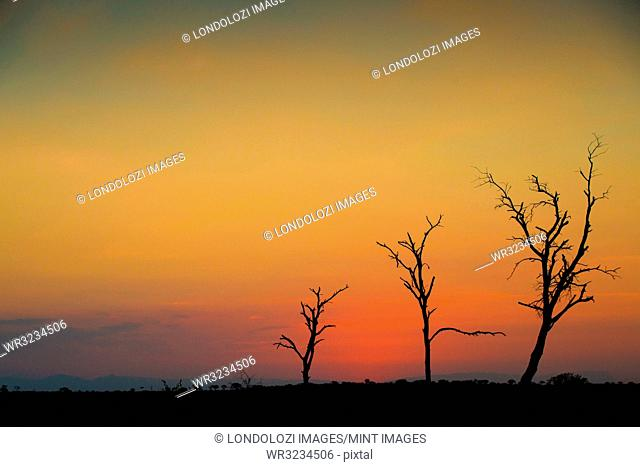 A silhouette of three bare trees against a sunset over the horizon