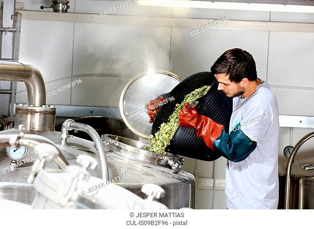 Worker in brewery, adding hops to brew kettle