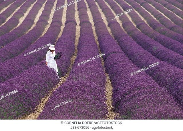Girl in Lavender field, Plateau de Vaucluse, Sault, Provence, France