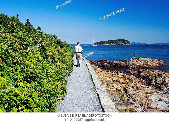 A man looks towards the ocean while walking on Bar Harbor's Shore Path, Maine, United States