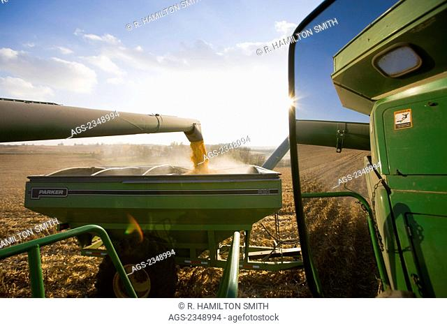 """Agriculture - View of grain corn harvest from the cab of a combine showing corn being augered into a grain cart """"on-the-go"""" and a reflection in the combine..."""