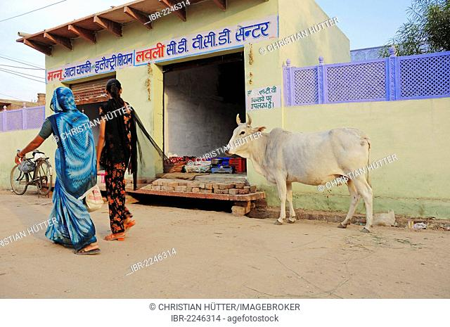 Zebu cattle (Bos primigenius indicus), in front of a shop, holy cow, Bharatpur, Rajasthan, India, Asia, PublicGround