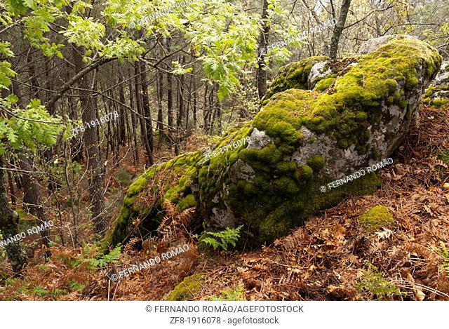 Granite rock in the forest, at Guarda, Portugal