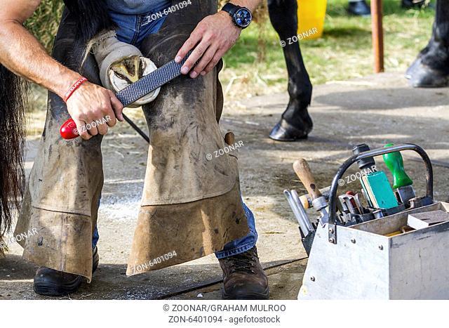 Filing Horses Hoof Flat Before Fitting Shoe UK