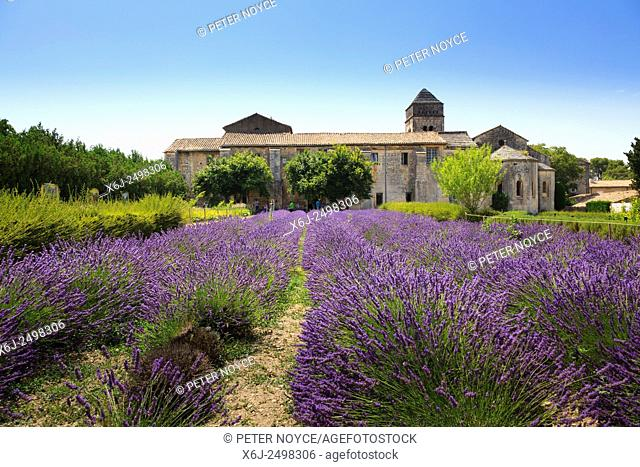 The lavender field in full bloom at Maison de Sante Saint Paul Monastery at Saint Remy