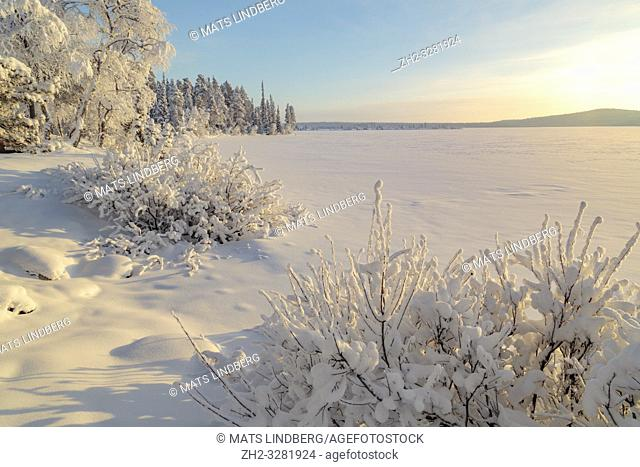 Landscape in winter season, nice warm afternoon light, snowy trees, mountain in background, Gällivare county, Swedish Lapland, Sweden