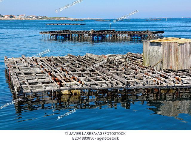 Cultivation of mussels, semi-submerged platform Batea marine cultivation, O'Grove, Ria de Arousa, Pontevedra province, Galicia, Spain