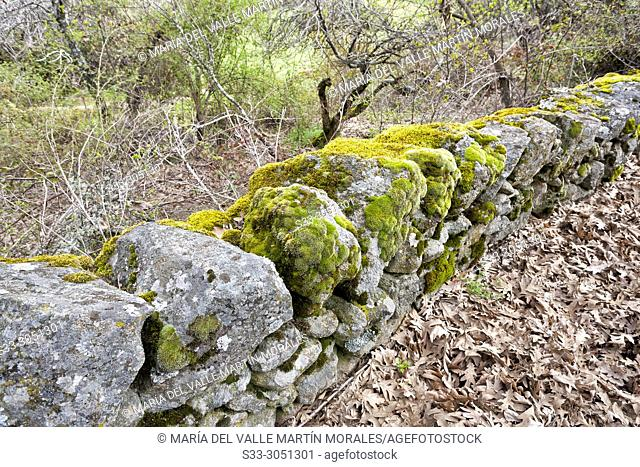 Fence with moss between the oaks in Higuera de las Dueñas. Avila. Spain