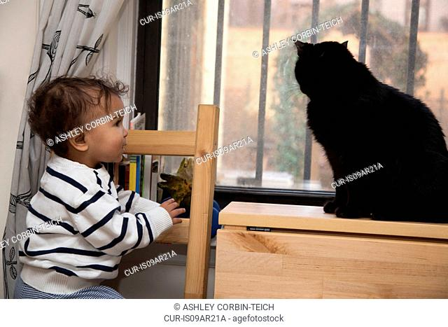 Portrait of female toddler watching cat on windowsill