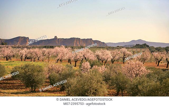 Cidacos valley, Arnedo lands, Biosphere reserve, La Rioja, Spain, Europe