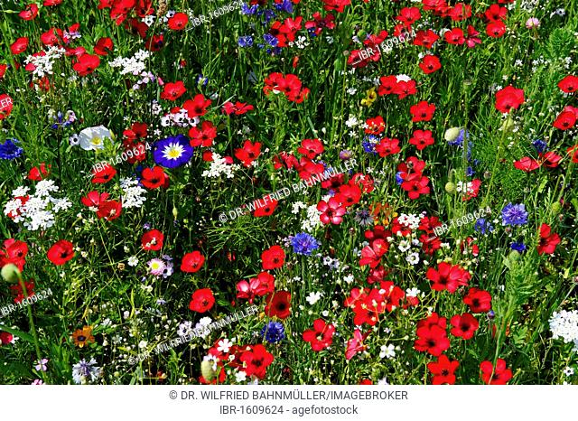 Blooming, colourful flowers, wild flowers, bee pasture