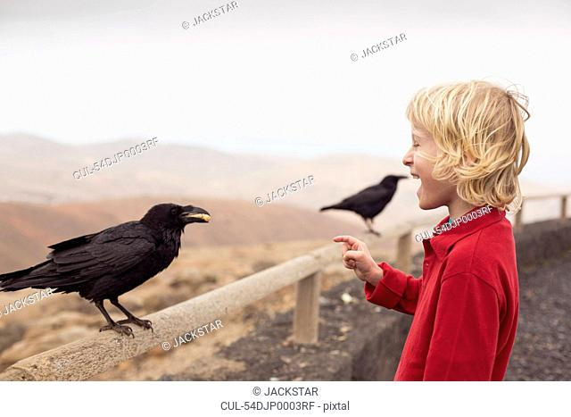 Boy feeding crow on fence