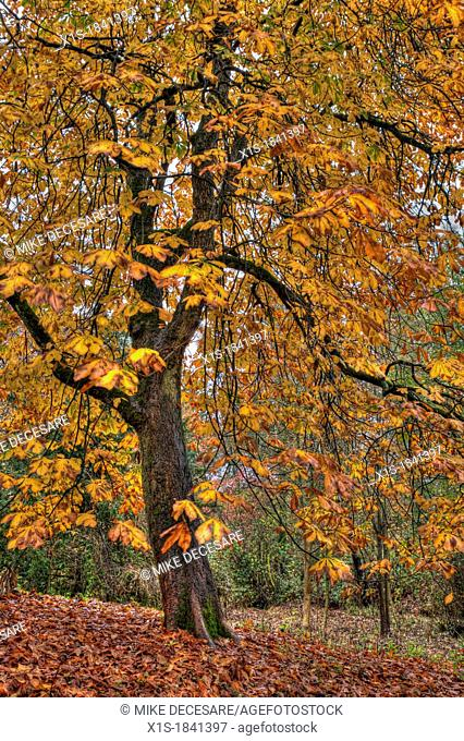 Yellow leaves shedding a lone tree in fall