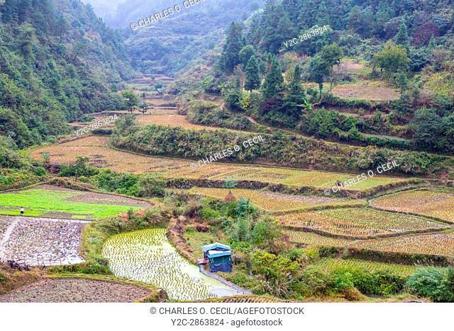 Guizhou, China, between Kaili and Zhenyuan. Rice Paddies after Harvest