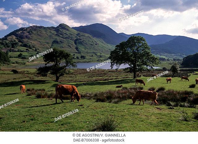 Grazing lands surrounding Buttermere Lake, Lake District (UNESCO World Heritage Site, 2017), United Kingdom