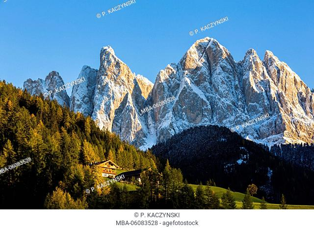 Colorful autumnal larch trees in front of the Odle Range (Geislerspitzen) at sunset, Dolomites, St. Magdalena, Val di Funes, Bolzano district
